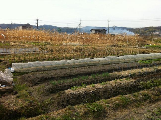 やまむファームの畑