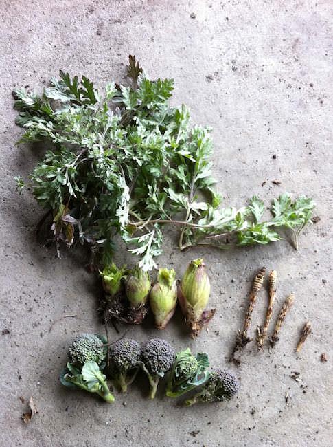 畑で採れた山菜