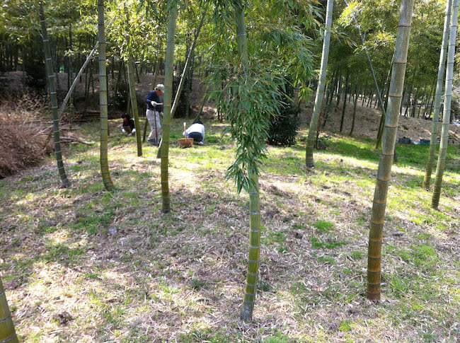 タケノコ畑(竹やぶ)