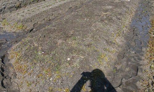 有機農業の勉強用に畑の一部を空けてもろた