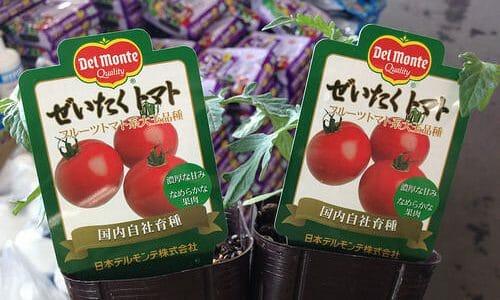 トマトの定植。ぜいたくトマトとやらも植えてみた。