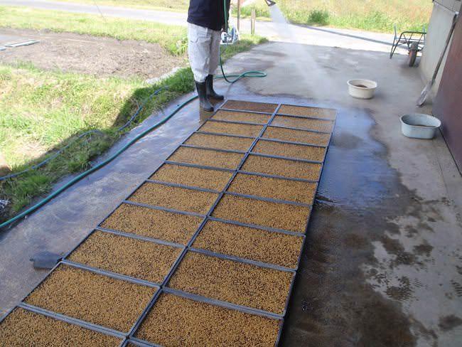 種籾まき - 米の苗代づくり