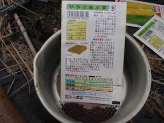 サラダ京水菜の種