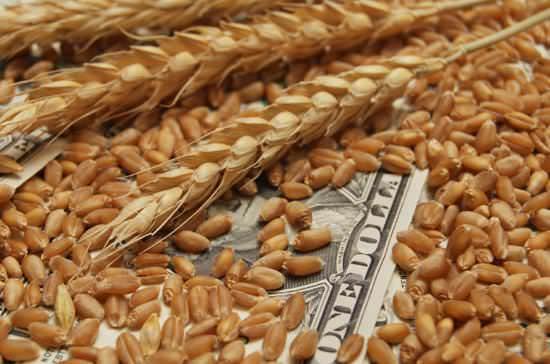 儲かる農業