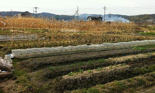 週末農業を始めました