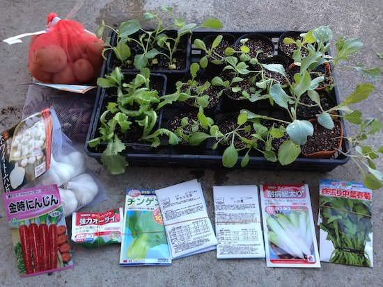 2013年秋冬野菜の植付け