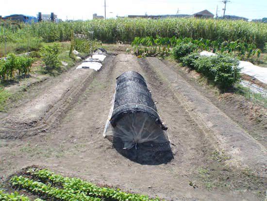 冬野菜の植付け地