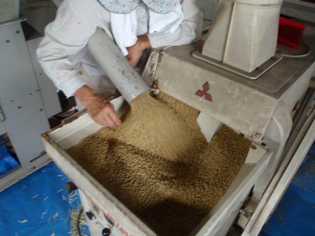 機械で米の臼挽き/籾摺り