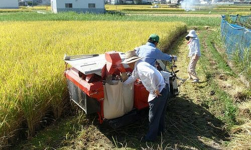今年も無事にお米の収穫終わりました
