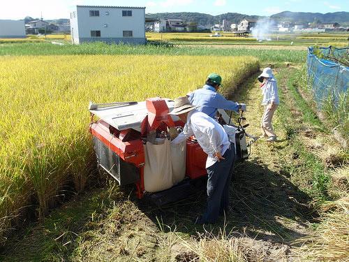 お米の収穫作業