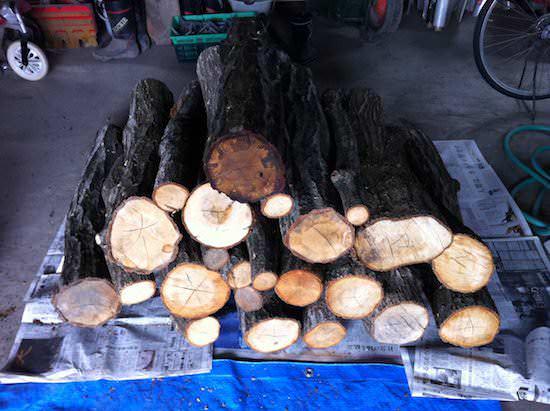 ほだ木 - しいたけの原木栽培