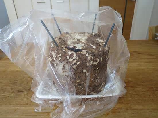 しいたけ栽培キットには袋を被せて乾燥させない