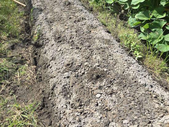 太陽熱土壌消毒後の土