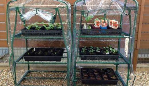 庭やベランダで作る簡易な育苗ハウス・ビニール温室