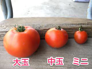 大玉・中玉・ミニトマト