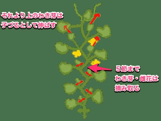 キュウリの脇芽かき