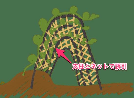 カボチャの立体栽培(空中栽培)