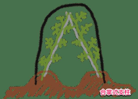 トマト雨よけ屋根の高さ(合掌式支柱)