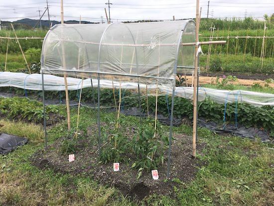 雨よけハウス トマトの屋根 NT-18型