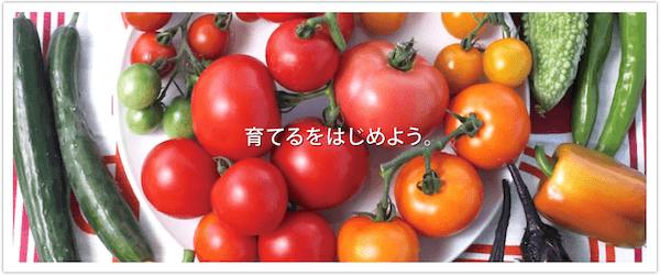 デルモンテの野菜苗