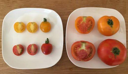 デルモンテのトマト苗4種の栽培記録