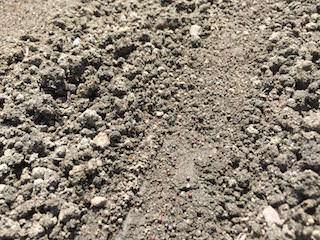 チンゲンサイの種まき