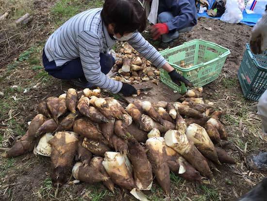収穫したタケノコを山分け