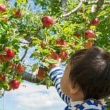 家族連れのレジャーにオススメ!農業体験・農家民宿が探せるサイト