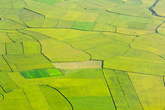 田畑の面積