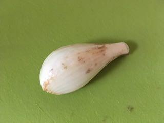根と茎を切り落としたラッキョウ