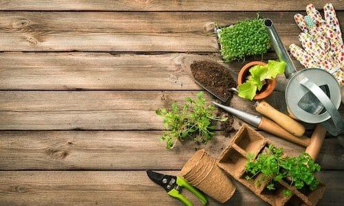野菜の育て方