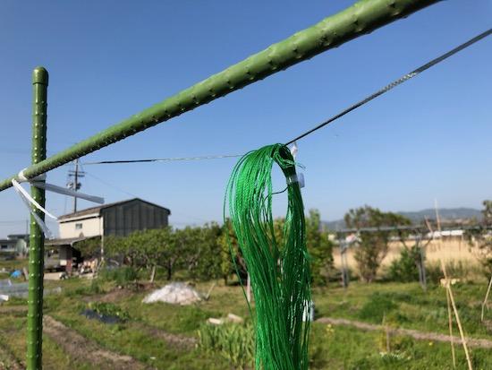 きゅうりネットの輪っかに張りひもを通す
