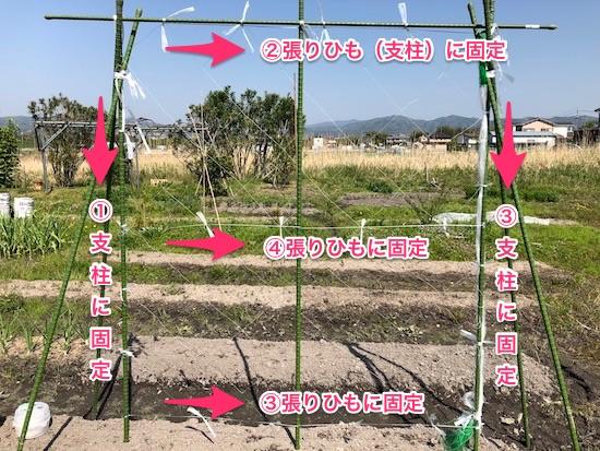 きゅうりネットの張り方(広げる順番)