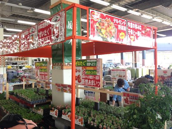 園芸店で販売されている野菜の苗
