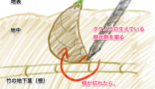 タケノコの掘り方(図解と動画付き)