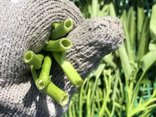 空芯菜の茎は空洞になっている