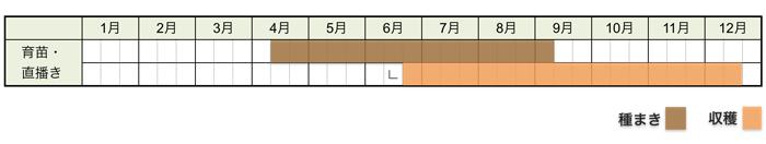 チンゲンサイ(青梗菜)の栽培時期・栽培スケジュール