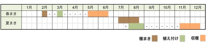 カリフラワーの栽培時期・栽培スケジュール