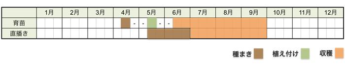 クウシンサイ(空芯菜)の栽培時期・栽培スケジュール