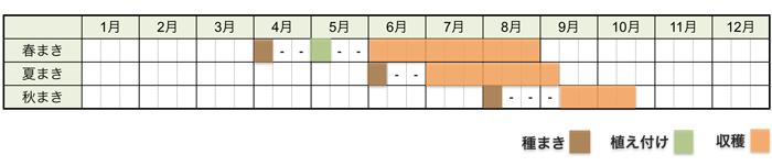キュウリの栽培時期・栽培スケジュール