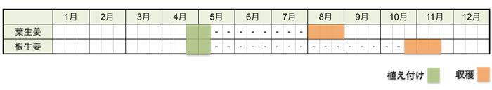 ショウガ(生姜)の栽培時期・栽培スケジュール