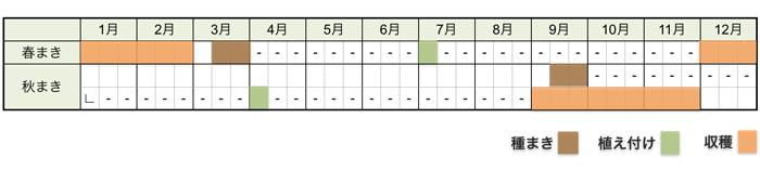 長ネギ(白ネギ・根深ネギ)の栽培時期・栽培スケジュール