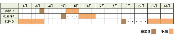 ダイコン(大根)の栽培時期・栽培スケジュール