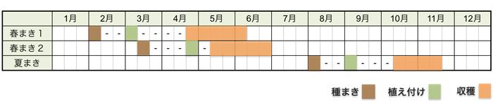 レタスの栽培時期・栽培スケジュール