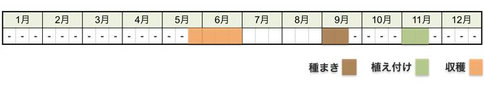 タマネギ(玉ねぎ)の栽培時期・栽培スケジュール