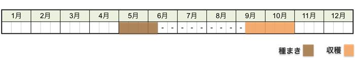 ラッカセイ(落花生)の栽培時期・栽培スケジュール
