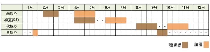 ラディッシュの栽培時期・栽培スケジュール