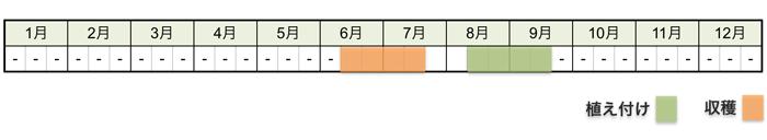 ラッキョウの栽培時期・栽培スケジュール