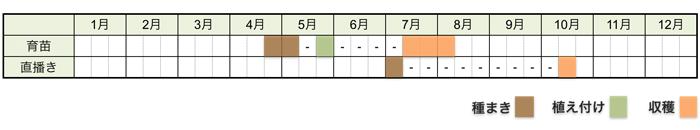 エダマメ(枝豆)の栽培時期・栽培スケジュール