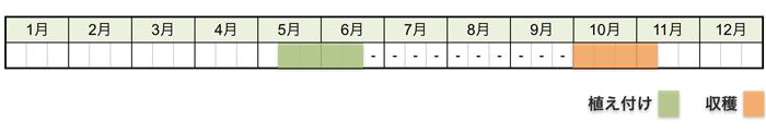 サツマイモの栽培時期・栽培スケジュール